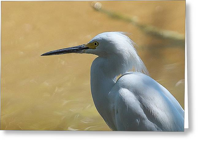 Egret Pose Greeting Card