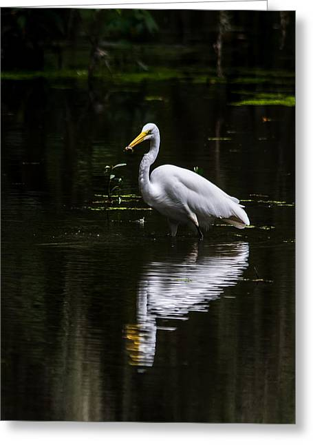 Egret Refelction Greeting Card