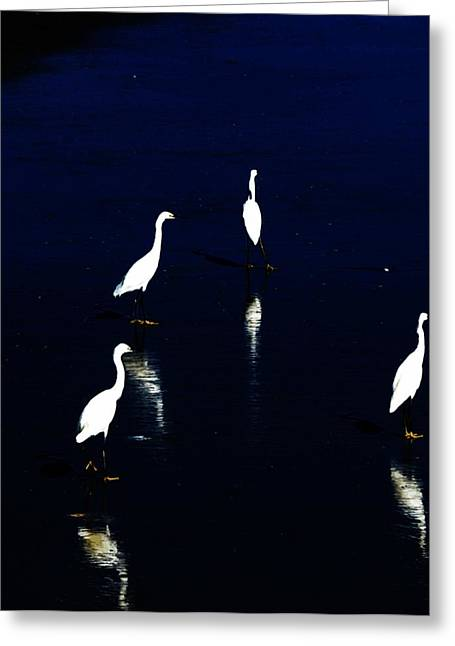 Sea Shore Digital Art Greeting Cards - Egret Reflections Greeting Card by David Lane