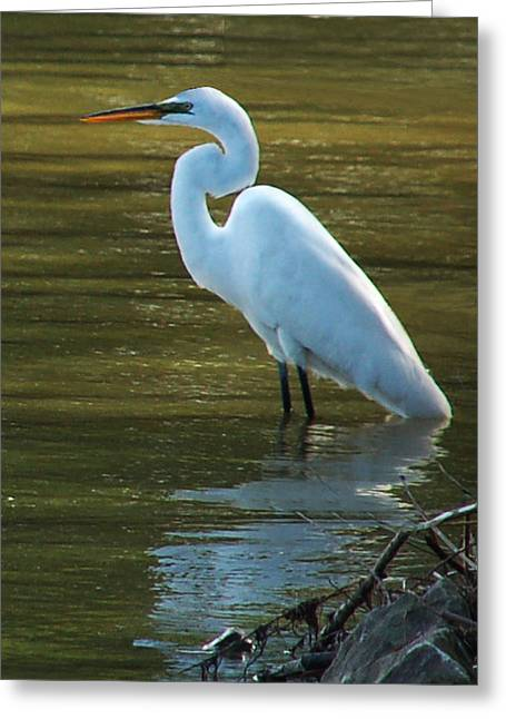 Greeting Card featuring the photograph Egret Resting by Kathleen Stephens