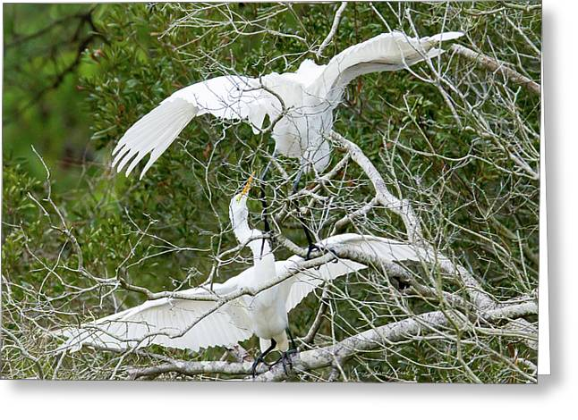 Greeting Card featuring the photograph Egret Rumble by George Randy Bass