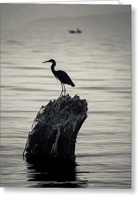 Egret Silhouette Greeting Card by Dane Strom
