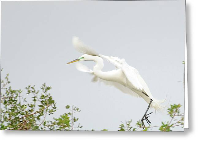Egret-taking Flight Greeting Card by Keith Lovejoy