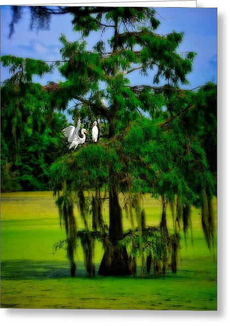 Greeting Card featuring the photograph Egret Tree by Harry Spitz
