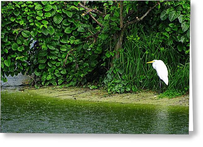 Egret Wakodahatchee Florida Wetlands Greeting Card