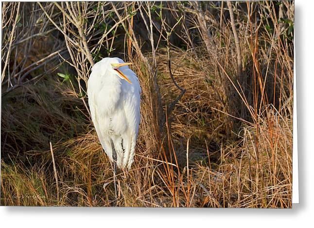 Egret With Something To Say Greeting Card