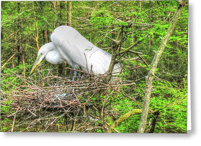 Egrets And Eggs Greeting Card