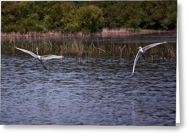Egrets IIi Greeting Card by Gary Adkins
