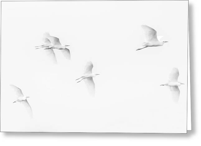 Egrets White On White B/w Greeting Card