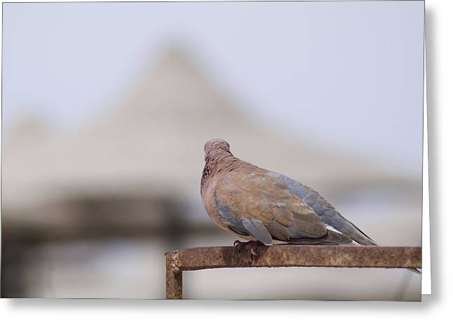 Egypt Greeting Card by Be Lucca