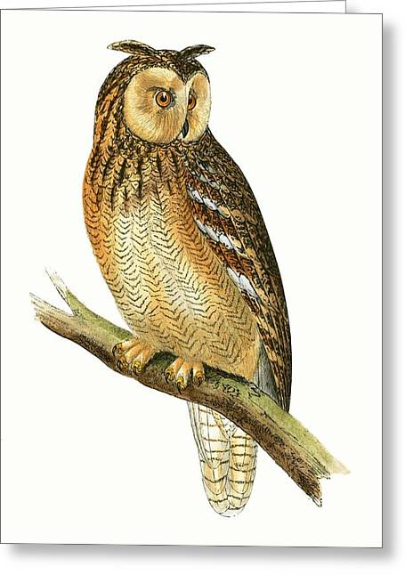 Egyptian Eared Owl Greeting Card by English School