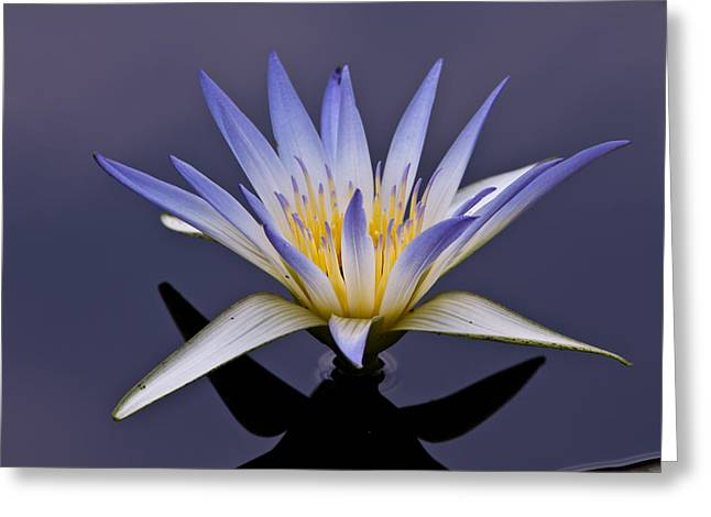Greeting Card featuring the photograph Egyptian Lotus by Louis Dallara
