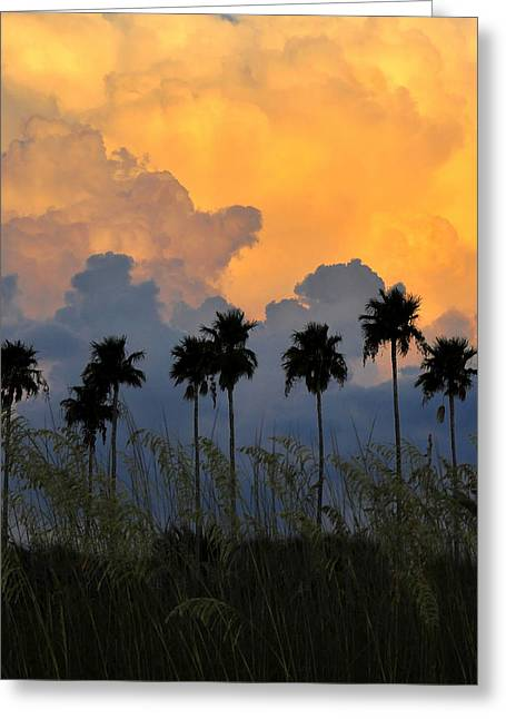 Summer Storm Greeting Cards - Eight Palms Greeting Card by David Lee Thompson