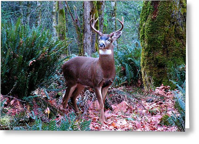 Eight Point Buck Greeting Card by Tim Mattox