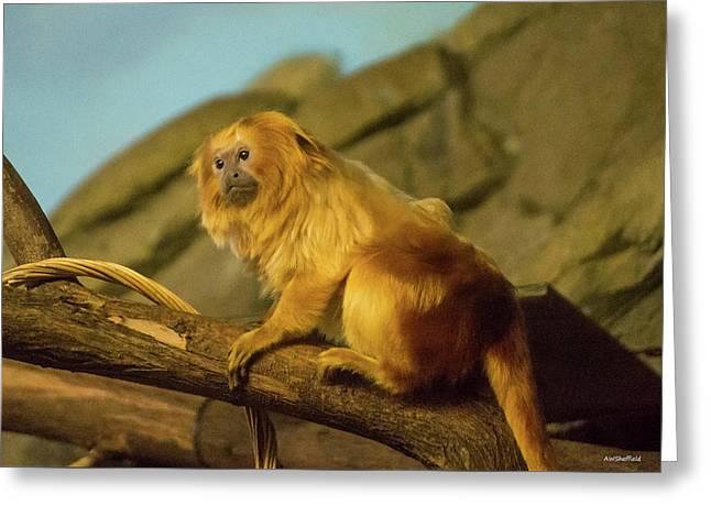 El Paso Zoo - Golden Lion Tamarin Greeting Card