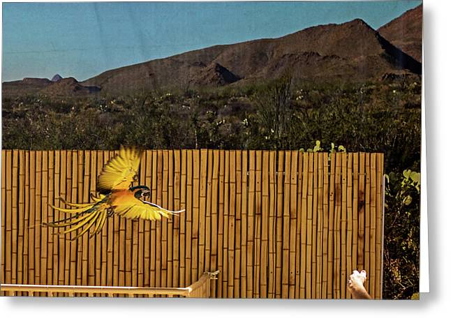 El Paso Zoo - Macaw Parrot Greeting Card