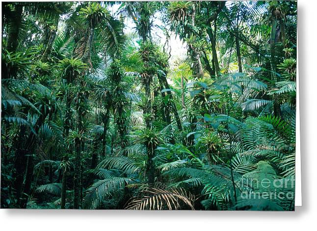 El Yunque National Forest Greeting Card by John Kaprielian