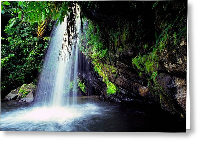 Verdant Greeting Cards - El Yunque Waterfall Greeting Card by Thomas R Fletcher