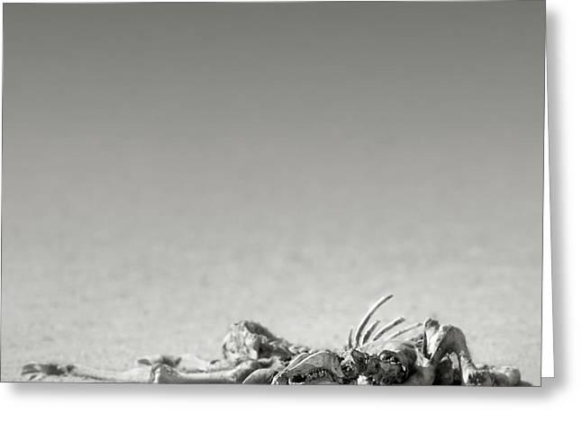 Eland Skeleton In Desert Greeting Card
