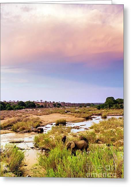 Elaphants, Sabi River, Sunset Greeting Card by Daryl L Hunter