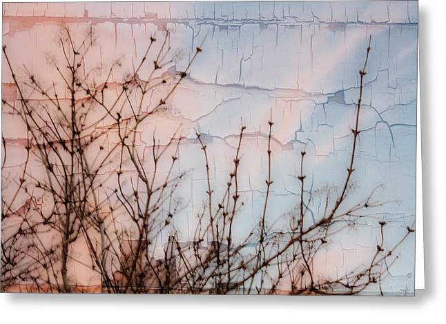 Elder Branches Silhouette Greeting Card by Sandra Foster