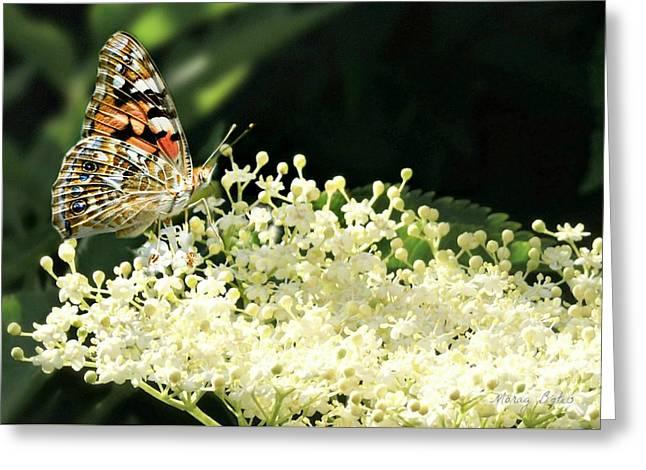 Elderflower And Butterfly Greeting Card