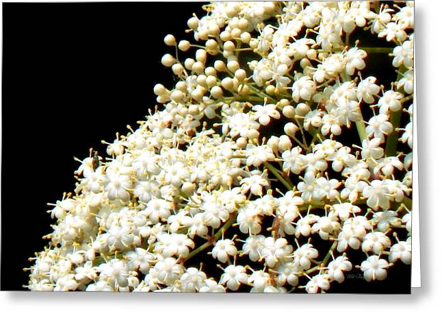 Elderflower Tree Greeting Card