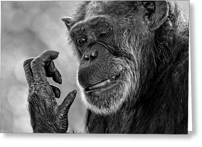 Elderly Chimp Studying Her Hand Greeting Card