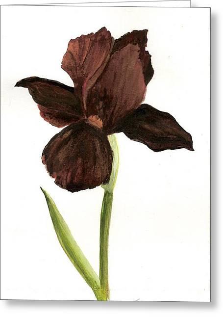 elderly Iris Greeting Card by Susan Tilley