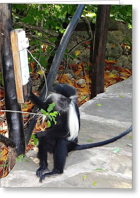 Electrical Work - Monkey Power Greeting Card