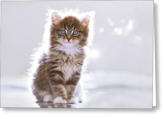 Electrikitten  Greeting Card