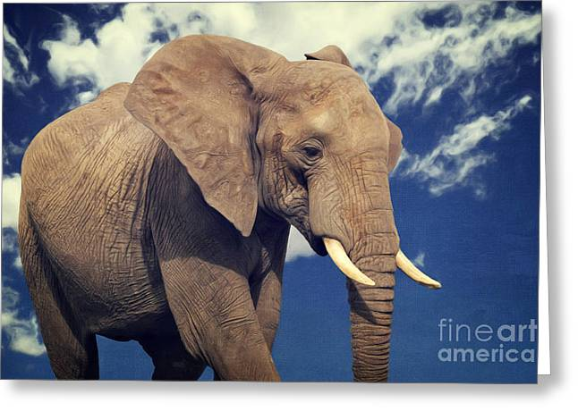 Elefanten Portrait Greeting Card by Angela Doelling AD DESIGN Photo and PhotoArt