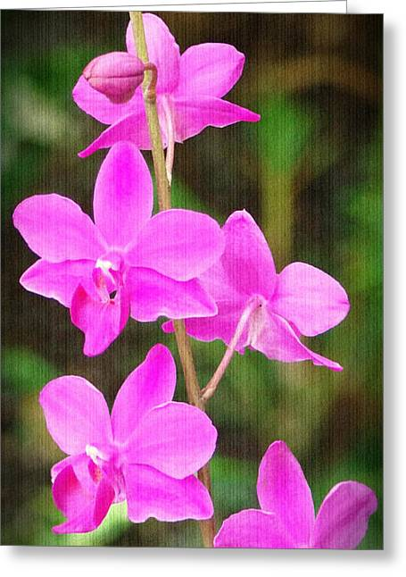 Elegance In Nature Greeting Card by Sue Melvin