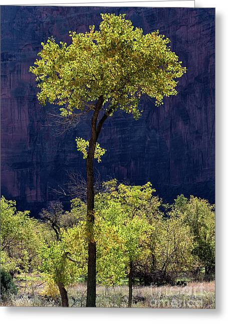 Elegance In The Park Utah Adventure Landscape Photography By Kaylyn Franks Greeting Card