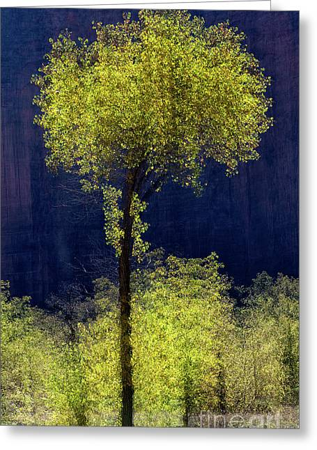 Elegance In The Park Vertical Adventure Photography By Kaylyn Franks Greeting Card