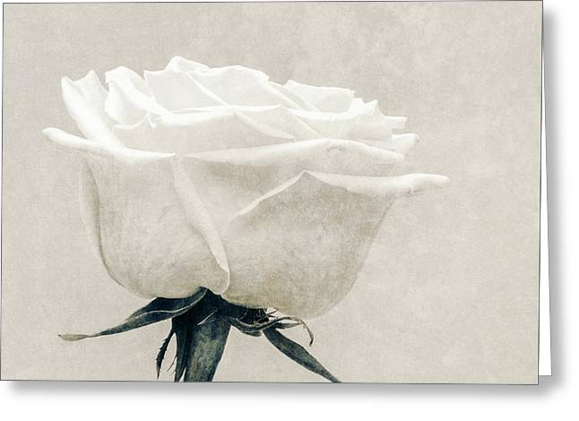 Elegance In White Greeting Card
