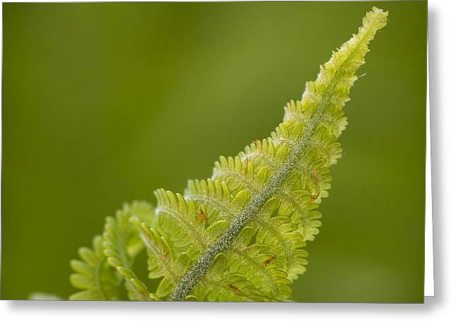 Elegant Fern. Greeting Card