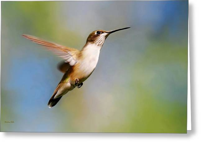 Elegant Hummingbird Journey Greeting Card by Christina Rollo