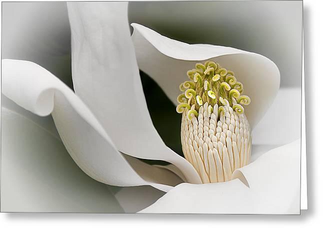 Elegant Magnolia II Greeting Card