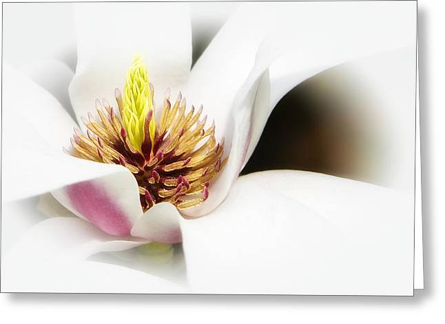 Greeting Card featuring the photograph Elegant Magnolia by Ken Barrett