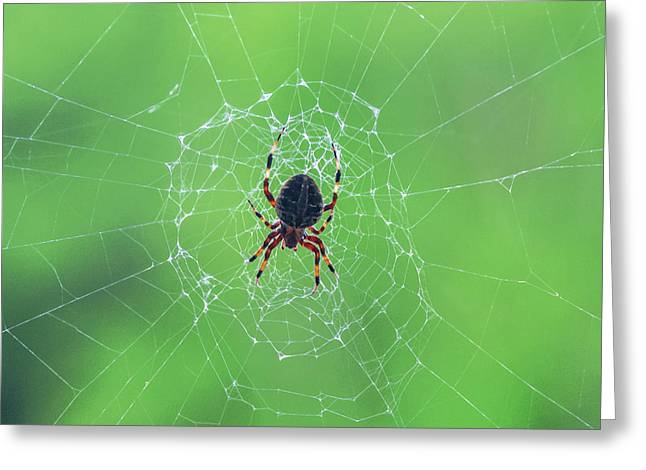 Elegant Web With Spider Dry Brush Effect Greeting Card