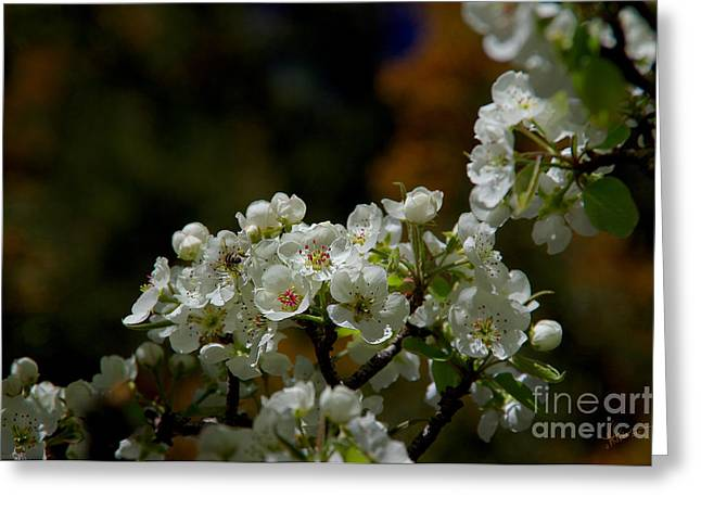 Elegantly White Greeting Card by Vicki Pelham