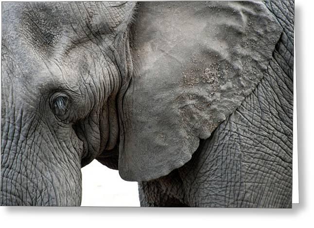 Elephant 2 Greeting Card