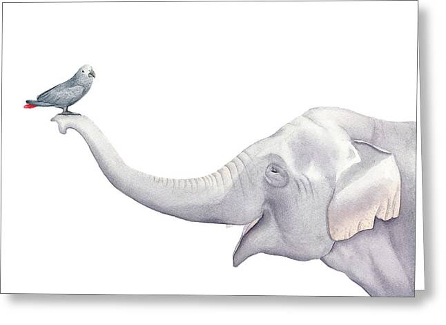 Elephant And Bird Watercolor Greeting Card