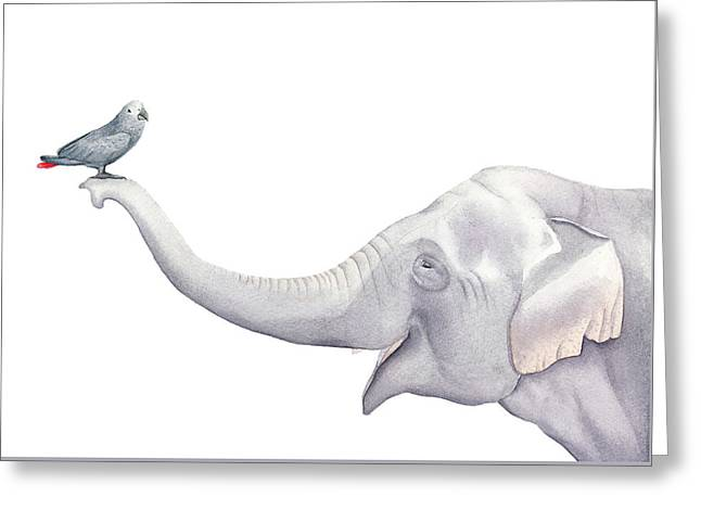 Elephant And Bird Watercolor Greeting Card by Taylan Apukovska