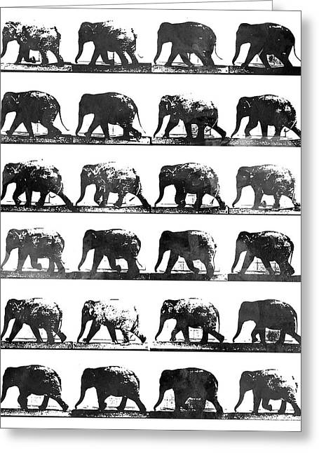 Elephant Animal Locomotion - Bw Greeting Card