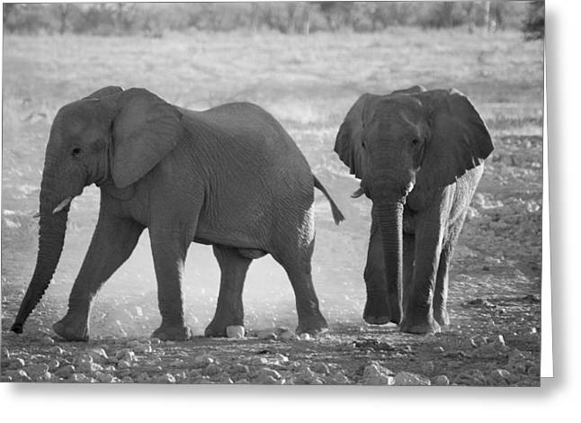 Elephant Buddies - Black And White Greeting Card by Nancy D Hall