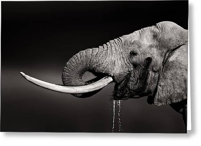 Elephant Bull Drinking Water - Duetone Greeting Card by Johan Swanepoel