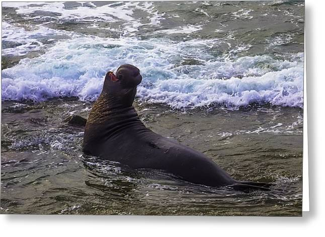 Elephant Bull Seal In Surf Greeting Card by Garry Gay