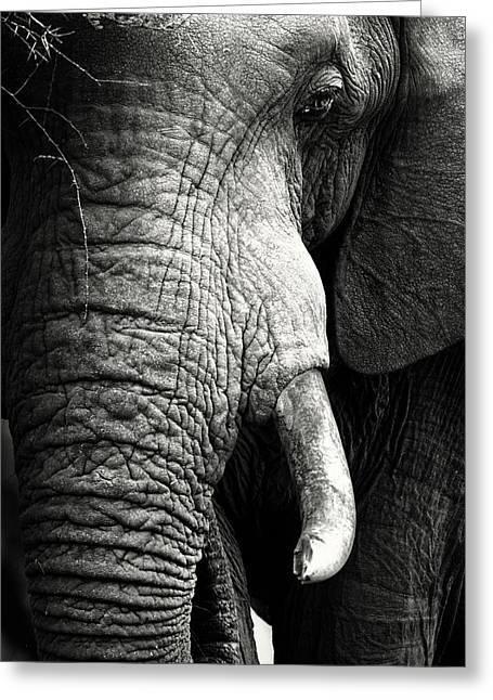 Elephant Close-up Portrait Greeting Card